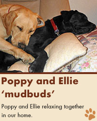 Poppy and Ellie