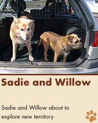 Sadie and Willow
